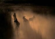selous-national-park-1