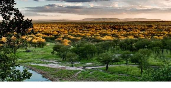 Kempinski Serengeti (10)