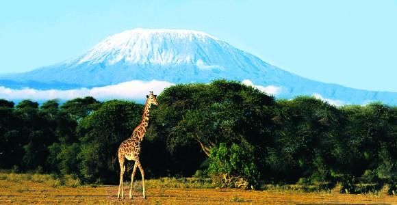 kilimanjaro (4)