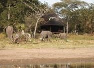 selous-safari-camp-4