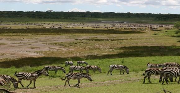 Serengeti Overland