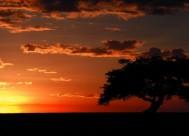 Mara Safari Kenya