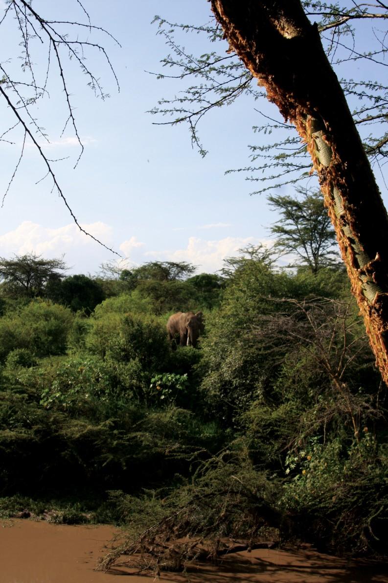 Mara-Simba