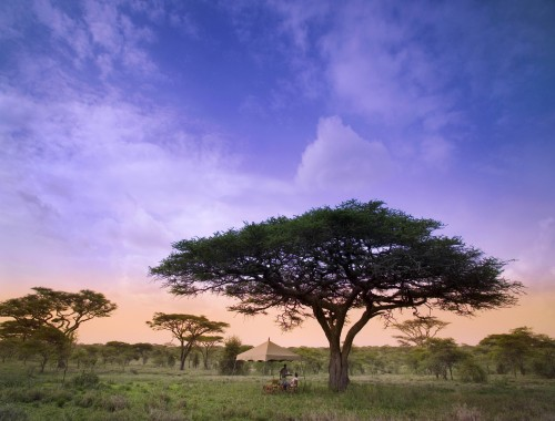 Serengeti Under Canvas