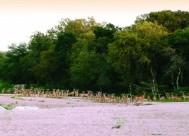 Motswari Game Reserve