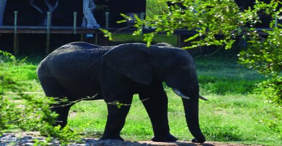 Royal-Legend-Safari